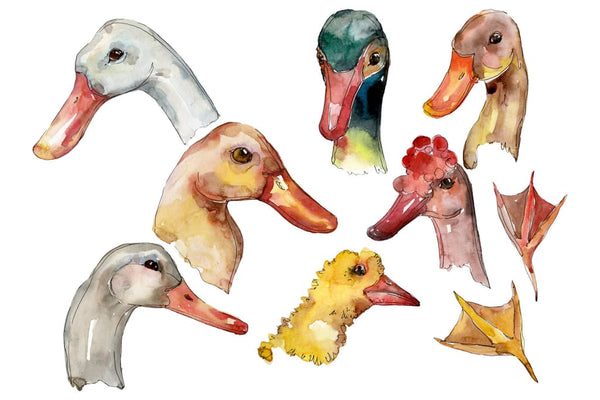 Farm animals: duck head Watercolor png Flower