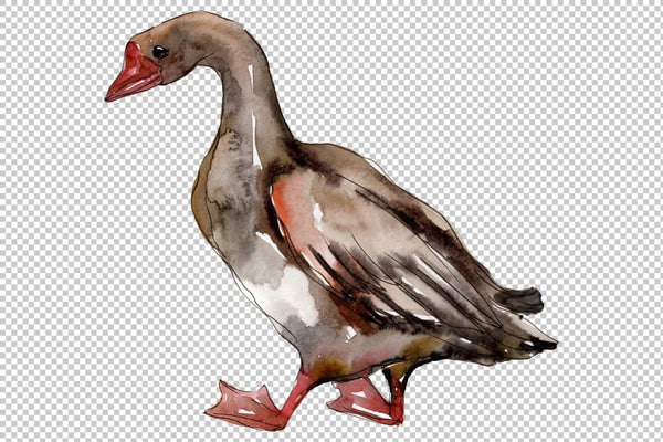 Farm animals: geese Watercolor png Flower