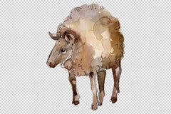 Farm animals: lamb Watercolor png Flower