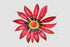 products/flower-red-gazania-png-watercolor-set-background-botanical-colorful-drawing-drawn-watercolorpng_746.jpg