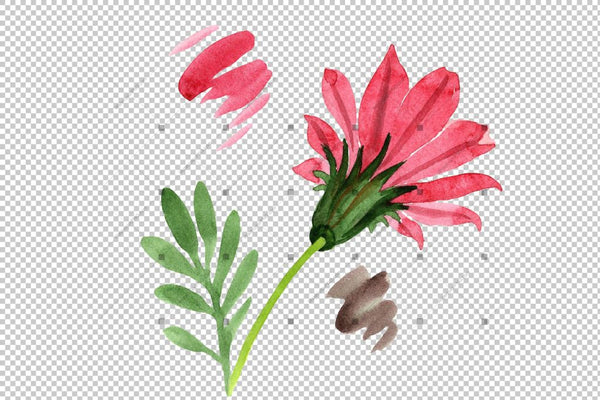 Flower Red Gazania Png Watercolor Set