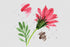 products/flower-red-gazania-png-watercolor-set-background-botanical-colorful-drawing-drawn-watercolorpng_972.jpg