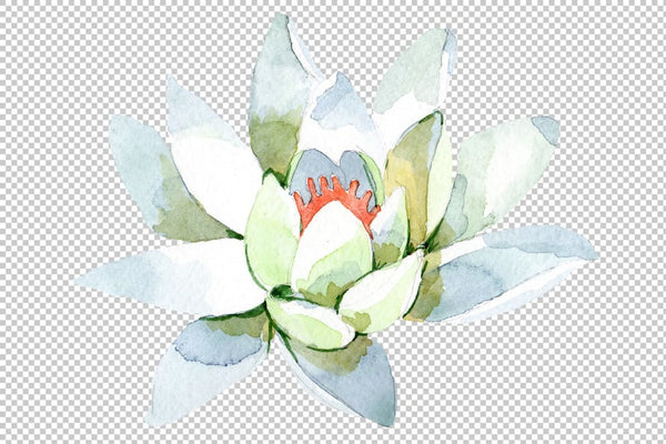 Flower White lotus Watercolor png Flower