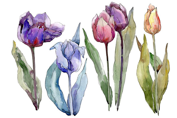 Flowers tulips cute compliment watercolor png Flower