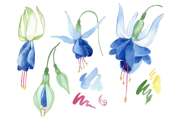 Fuchsia blue watercolor png Flower