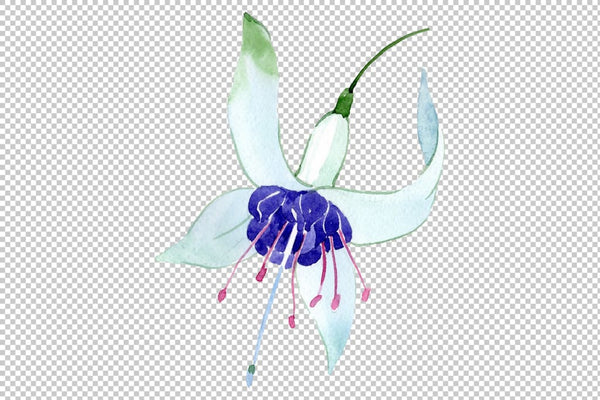 Fuchsia Watercolor png Flower