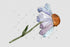 מוצרים / עדין-קמומיל-png-water-color-set-background-Botanical-camomile-chamomel-flower-watercolorpng_129.jpg