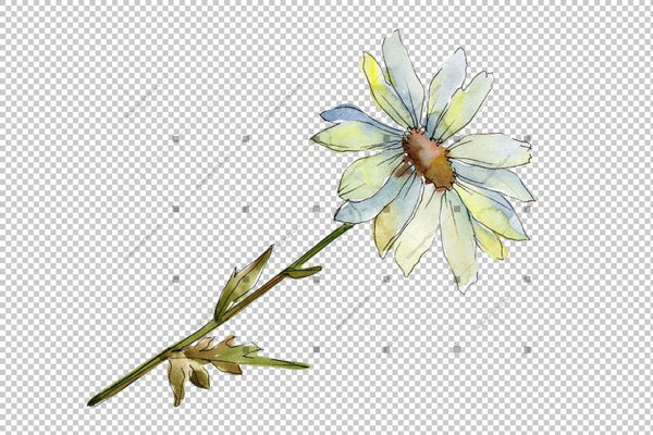 Gentle Chamomile Png Watercolor Set Flower