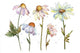 Gentle chamomile PNG watercolor set