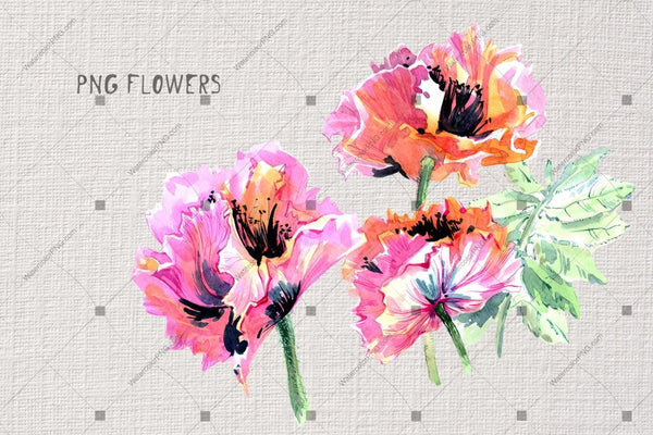 Gentle Poppies Png Watercolor Set Digital
