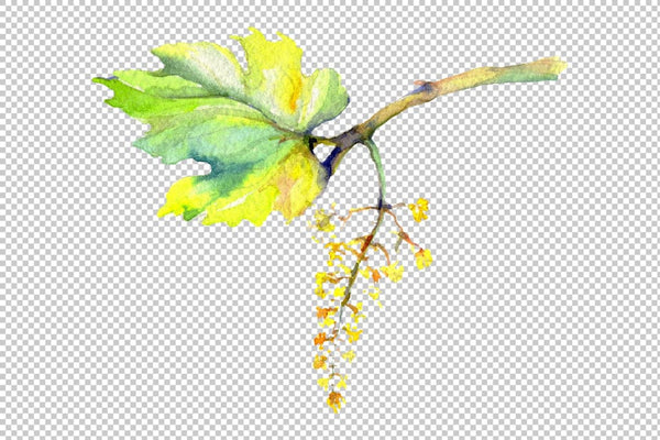 Grapes Watercolor png Flower