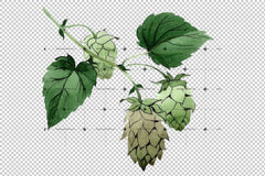 Green Watercolor Hops Png Set Flower