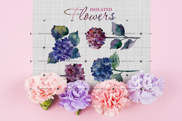 Heartfelt Pink And Blue Hydrangea Digital