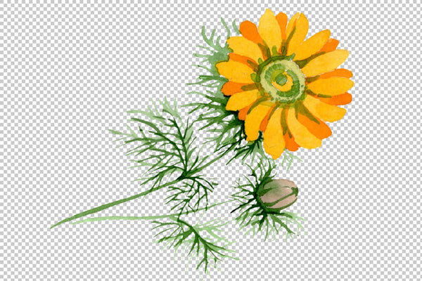 Herbals Watercolor png Flower