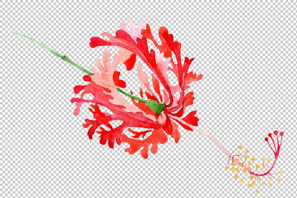 Hibiscus schizopetalon red Watercolor png Flower