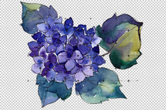 Hydrangea Purple And Blue Png Watercolor Set Flower