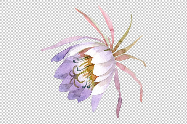 Kadupul watercolor png Flower