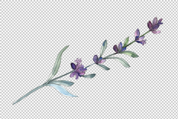 Lavender Watercolor png Flower