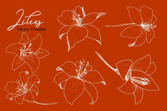 Lilies Vector Collection Digital