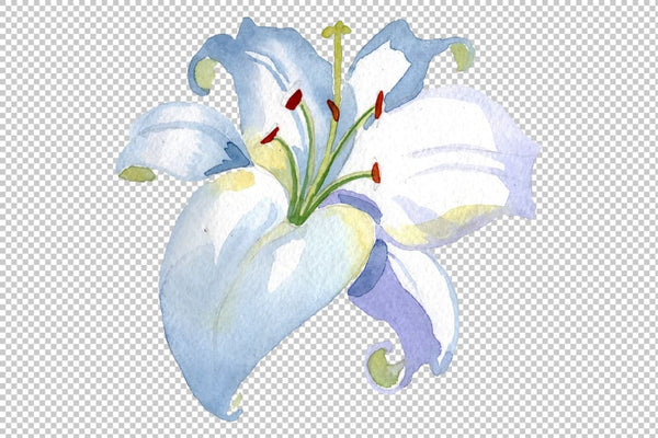 Lily white gift of nature watercolor png Flower