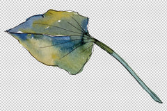 Flùr Lotus Watercolour png Flower