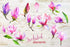 Produse / Meet-magnolie-png-acuarelă-floare-set-background-botanic-colorat-delicat-desen digital-watercolorpng_386.jpg
