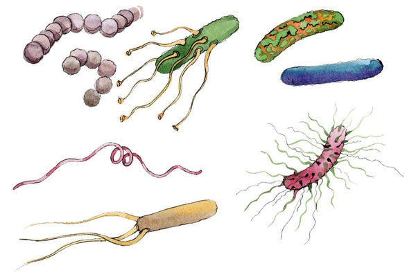 Microbes 1 Watercolor png Flower