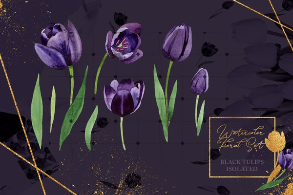 Mysterious Black Tulips In 44 Petals Digital