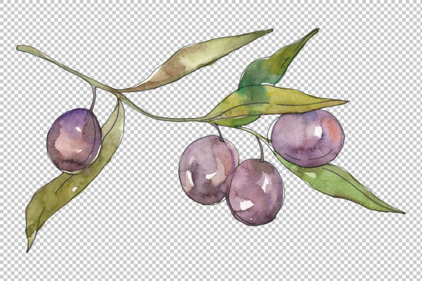 Olives 2 Watercolor png Flower