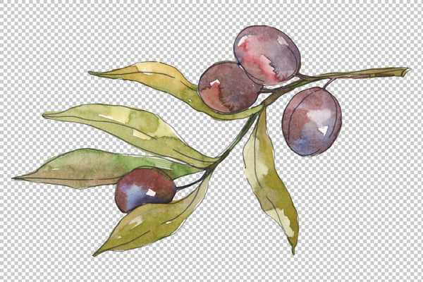 Olives Watercolor png Flower