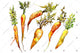 Orange carrot PNG watercolor vegetables set