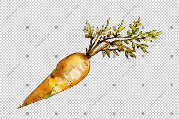 Orange Carrot Png Watercolor Vegetables Set Digital