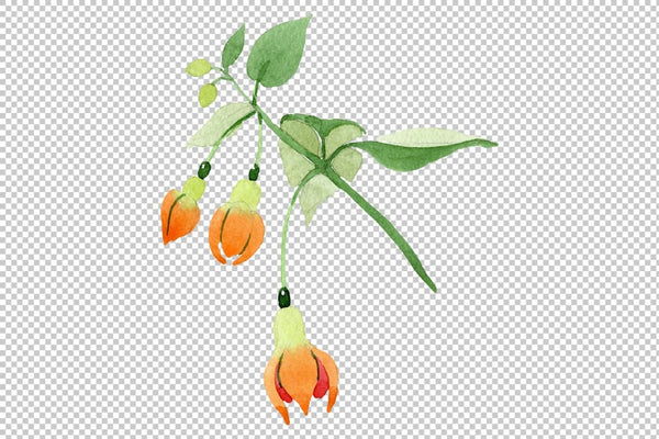 Orange Fuchsia Watercolor png Flower