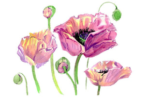 Original poppy Watercolor png Flower