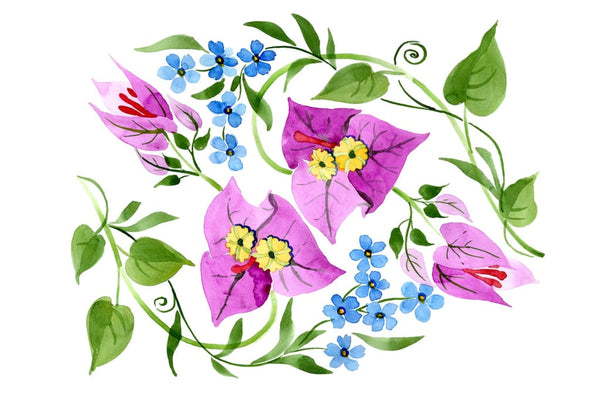 Ornament of Bougainvillea pink Watercolor png Flower