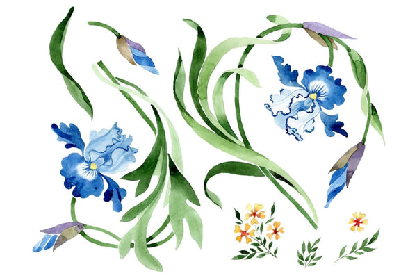 Ornament with irises Watercolor png Flower