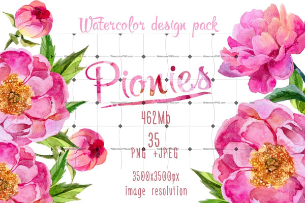 Paradise Pink Peonies Png Watercolor Set Digital
