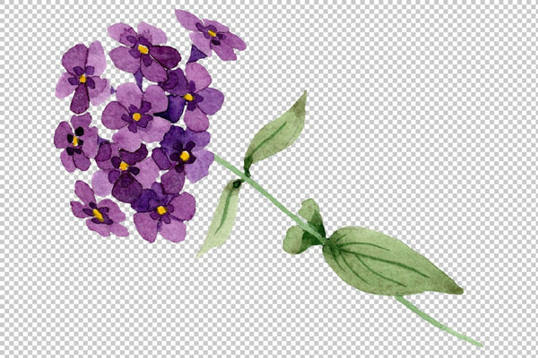 Phlox blue watercolor png Flower