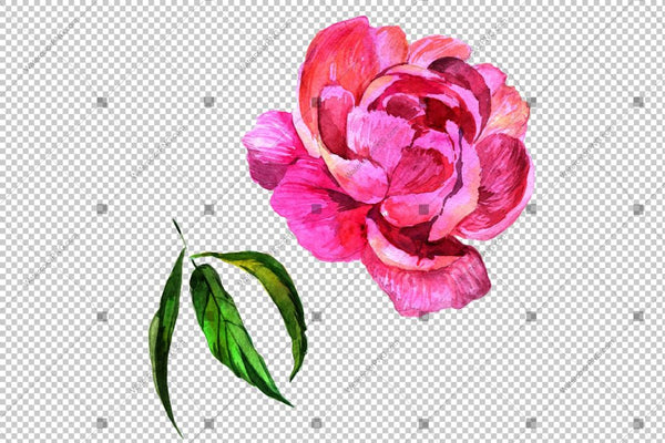 Pink Peony Watercolor Flower Png Flower