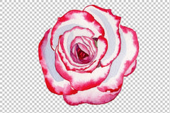 Pink rose good morning watercolor png Flower