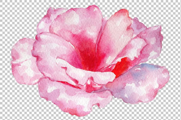 Pink Rose Strength of love watercolor png Flower