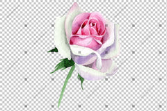 Pink Rose Watercolor Flower Png Flower