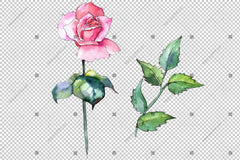 Pink Rose Wildflower Flower Na Aka - Drawn Watercolor Png Style kewapụrụ Alaka