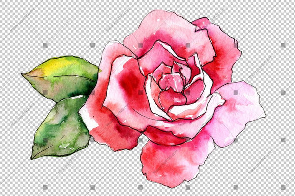 Pink Rose Wildflower Flower In A Hand-Drawn Watercolor Png Style Isolated Flower