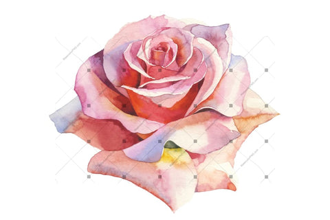 Pink Roses Realistic Png Watercolor Set Flower