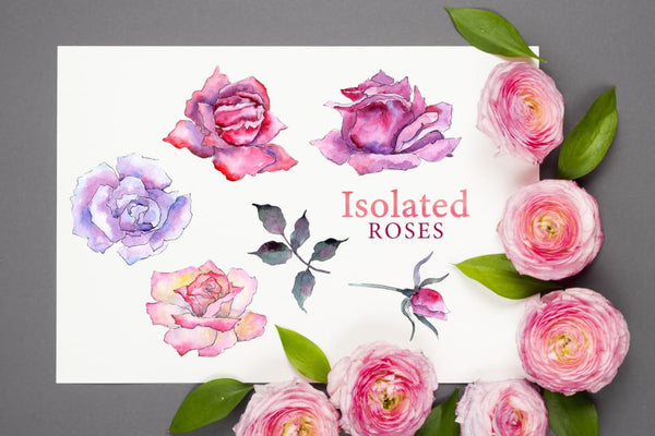 Pink Roses Watercolor png Digital