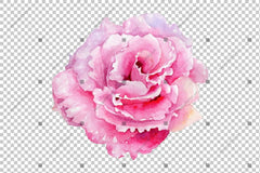 Pink Watercolor Rose Flower Png Flower