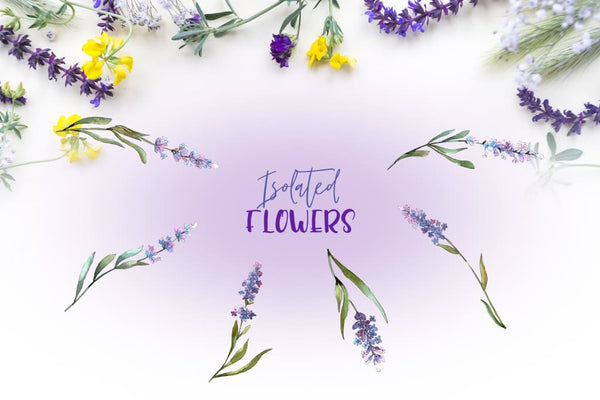 Plant lavender purple watercolor png Digital