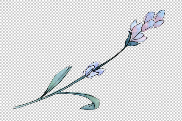 Plant lavender watercolor png Flower