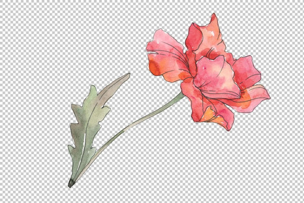 Poppy red Watercolor png Flower